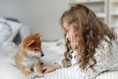 Small female kid has long curly hair plays with her favourite dog on bed, being glad to spend time with pet alone, have stock photography