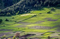 Small fenced farm plots of land. On a hill by the forest Royalty Free Stock Images