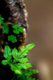 Small fern leaves Stock Photos