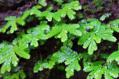 Small fern leaves Stock Image