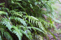 Small ferns growing in forest Royalty Free Stock Photography