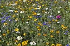 Small field flowers overview. Mixed variety of field flowers and thier colors. Kleines Feld Blumen Ãœbersicht fusia purple blue yellow white stock photo