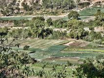 Small fields of farmers in southwest Guatemala. The Small fields of farmers in southwest Guatemala royalty free stock photography