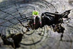 Small figure on tree stump Stock Image