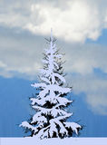 Small fir in blue snow at cloud sky Stock Photos