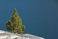 Small Fir Grows in Granite by a Lake Stock Photo