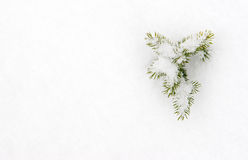 Small fir in snow Stock Photos