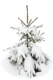 Small Fir in the Snow. On white Royalty Free Stock Photo
