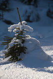 Small fir tree. In the winter forest Stock Image