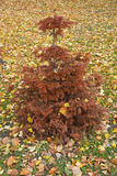 Small fir tree Stock Image