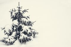 Small fir tree covered with snow and copy space 2. Small fir tree covered with snow and copy space, on white background of snowy winter. Vintage style Royalty Free Stock Photo