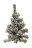 Small fir tree under snow. Isolated small fir tree under snow Stock Images