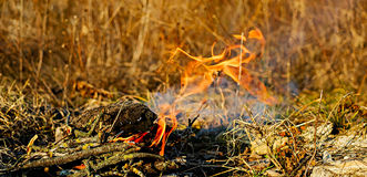 Small fire in nature Royalty Free Stock Images