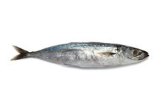 Small fish. From wet market royalty free stock images
