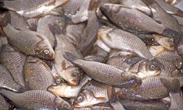 Small fish Stock Images