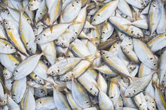 Fresh fish. Small fish in the basket ready for sale. Image top view Stock Photos