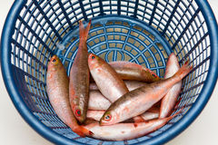 Small fish in the blue basket Stock Photography