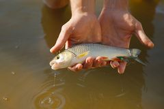 Small fish caught Royalty Free Stock Photos