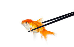 Small fish in chopsticks for sushi Royalty Free Stock Images