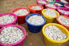 Small fish in colorful bucket. For feed mill industry Stock Photo
