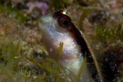 A small fish comes out on the rock Stock Photography