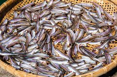 Small Fish drying on bamboo basket in the sun Stock Photos