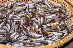 Small Fish drying on bamboo basket in the sun Stock Photo