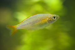 Small fish on green background Royalty Free Stock Photos