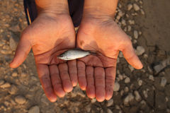 Small fish on hand. Metaphoric for climate change and water crissis Royalty Free Stock Photos