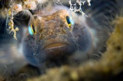 Small fish head Oosterschelde Netherlands. Focus on the mouth Royalty Free Stock Photos