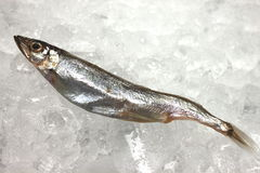 Small fish on ice Stock Photos