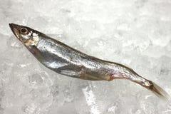 Small fish on ice Stock Photos