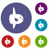 Small fish icons set. In flat circle red, blue and green color for web Stock Image