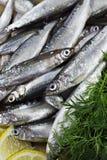 Small Fish, Natural Omega 3. Small Fish with Lemon and Dill Royalty Free Stock Photos