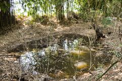 Small fish pond. In country Thailand royalty free stock images