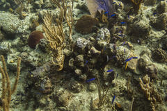 Small fish in reef Royalty Free Stock Photography