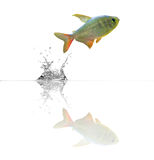 Small fish with reflection Stock Photo