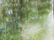 Small fish swim in a forest lake. stock footage