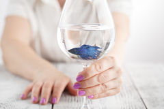 Small fish in wine glass, clear water in hands Stock Photos