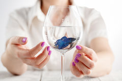 Small fish in wine glass, clear water in hands Stock Images