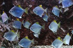 Small fishes Royalty Free Stock Photos