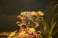 Small fishes Royalty Free Stock Photo