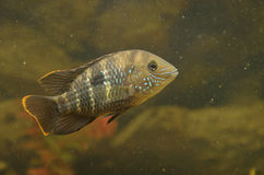 Small fishes Royalty Free Stock Photography