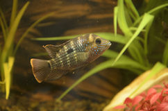 Small fishes Stock Photography