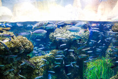 Small Fishes Royalty Free Stock Image
