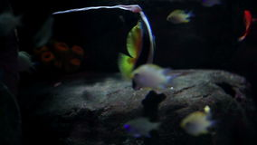 Small fishes in a lake. Shots of fishes swimming in aquarium stock video