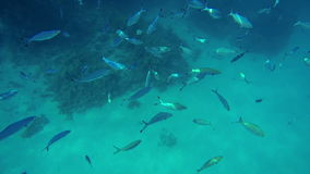 Small fishes scattered around the sea. Sea and water life, people having fun, sea creatures with corals. Perfect tourism themed place stock footage