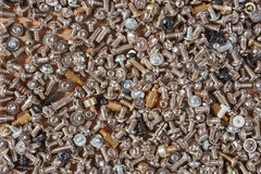 Small fixing screws Stock Photography