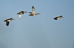 Small Flock of Ducks Flying in a Blue Sky Royalty Free Stock Images