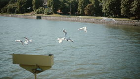 A small flock of white seagulls follows a boat flittering their wings in the air above it. Steadicam shot stock footage